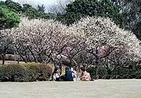 Shinjku Park